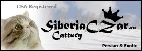 SiberiaCZar Cattery. Persian, Exotic